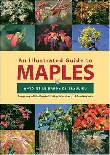 Illustrated Guide to Maples   2003 9780881926019 Front Cover