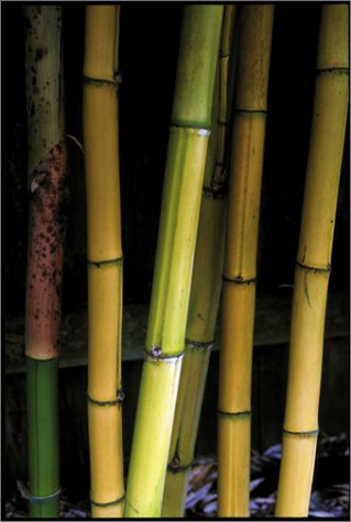 Bamboo for Gardens   2001 edition cover