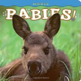 Moose Babies   2011 9781560375081 Front Cover