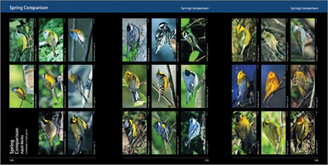 Warblers of the Great Lakes Region and Eastern North America   2003 9781552977095 Front Cover