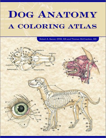 Dog Anatomy A Coloring Atlas  2002 edition cover