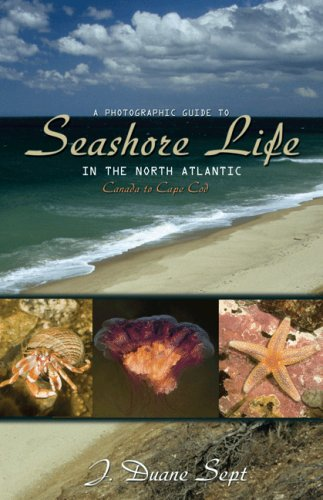 Photographic Guide to Seashore Life in the North Atlantic Canada to Cape Cod  2008 edition cover