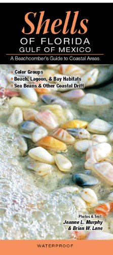 Shells of Florida -Gulf of Mexico A Beachcomber's Guide to Coastal Areas  2012 9781936913220 Front Cover
