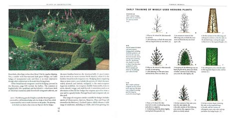 Topiary and the Art of Training Plants   2000 9781552094228 Front Cover