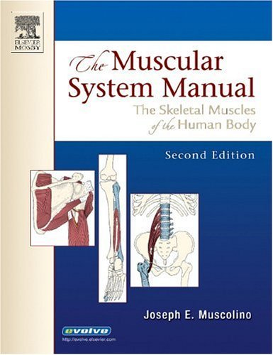 Muscular System Manual The Skeletal Muscles of the Human Body 2nd 2005 (Revised) edition cover
