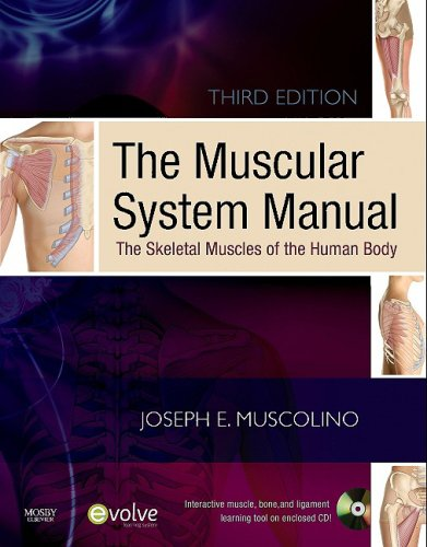 Muscular System Manual The Skeletal Muscles of the Human Body 3rd 2010 edition cover