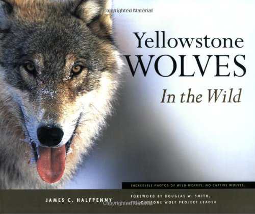 Yellowstone Wolves in the Wild 1st 2003 edition cover