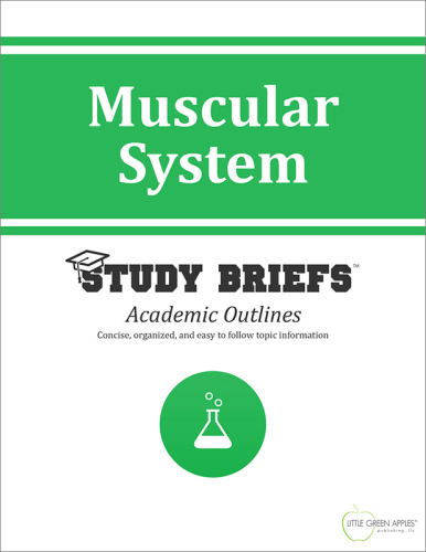 Muscular System   2015 9781634260275 Front Cover
