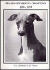 Italian Greyhound Champions, 1988-1992 N/A 9781558930292 Front Cover
