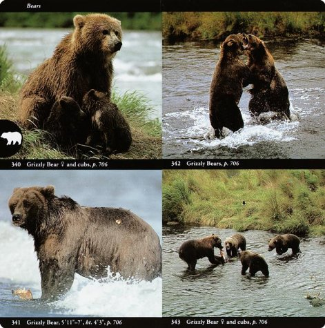 National Audubon Society Field Guide to North American Mammals  2nd 1996 (Revised) edition cover