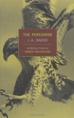 Peregrine   2005 edition cover