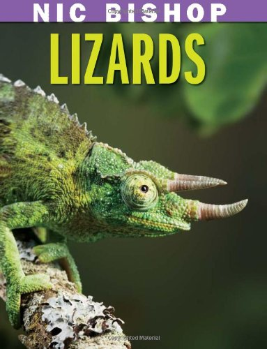 Lizards   2010 edition cover