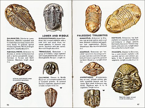 Fossils Fully Illustrated - Authoritative - Easy-to-Use Revised edition cover