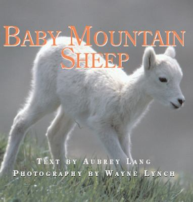 Baby Mountain Sheep   2007 9781554550432 Front Cover
