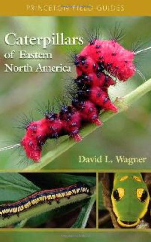 Caterpillars of Eastern North America A Guide to Identification and Natural History  2005 edition cover