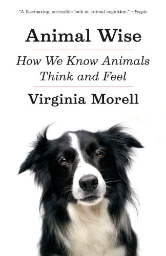 Animal Wise How We Know Animals Think and Feel N/A edition cover