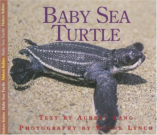 Baby Sea Turtle   2007 9781550417463 Front Cover