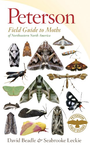 Peterson Field Guide to Moths of Northeastern North America   2012 9780547238487 Front Cover