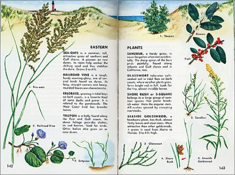 Seashore Life Fully Illustrated Authoritative Easy-to-Use Revised edition cover