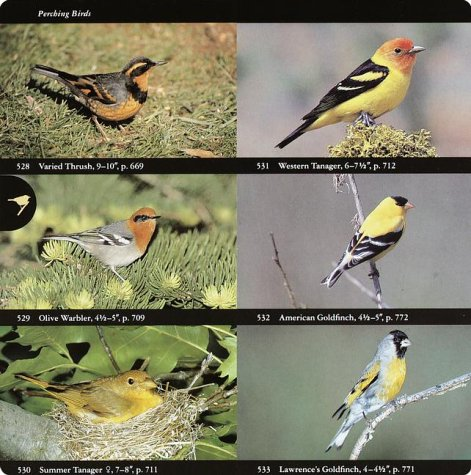 National Audubon Society Field Guide to North American Birds Western Region  1994 (Revised) edition cover