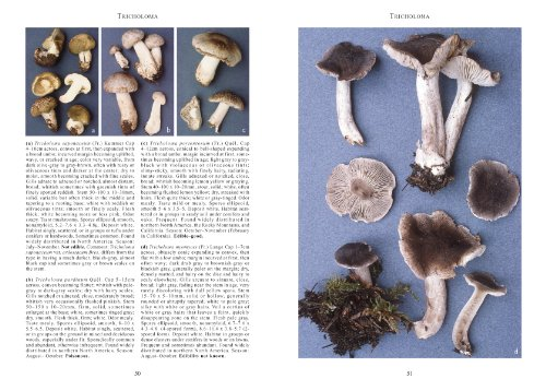 Mushrooms and Other Fungi of North America  2nd 2010 edition cover