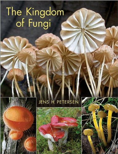 Kingdom of Fungi   2013 edition cover