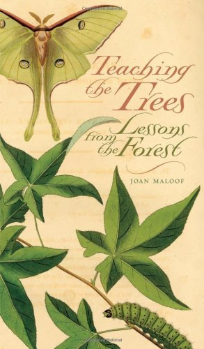Teaching the Trees Lessons from the Forest  2005 edition cover