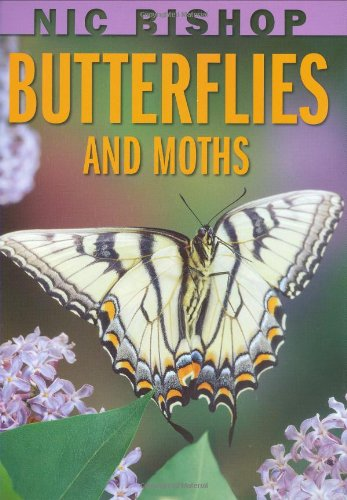 Butterflies and Moths   2009 9780439877572 Front Cover