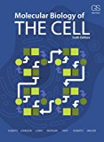 Molecular Biology of the Cell  6th (Revised) 9780815344643 Front Cover
