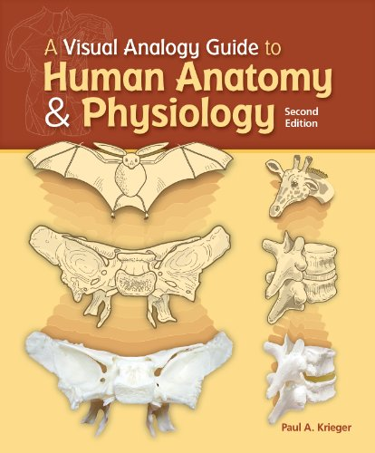Visual Analogy Guide to Human Anatomy and Physiology  2nd 2013 edition cover