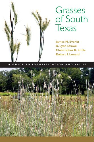 Grasses of South Texas A Guide to Identification and Value  2011 edition cover