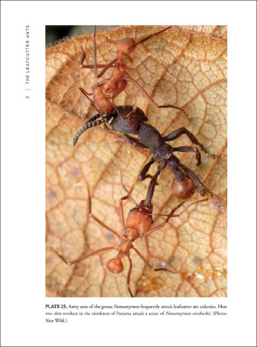 Leafcutter Ants Civilization by Instinct  2011 edition cover