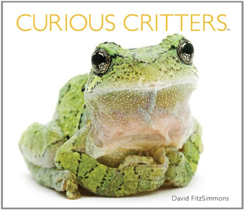 Curious Critters  N/A 9781936607693 Front Cover