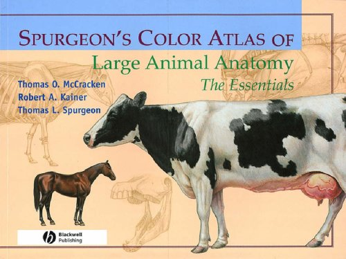 Spurgeon's Color Atlas of Large Animal Anatomy The Essentials  1999 edition cover