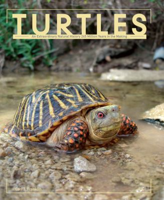 Turtles   2011 edition cover