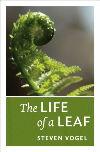 Life of a Leaf   2013 9780226104775 Front Cover