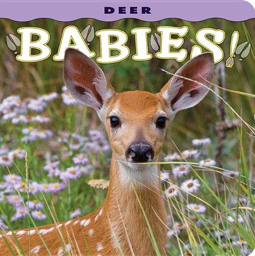 Deer Babies  N/A 9781560370833 Front Cover