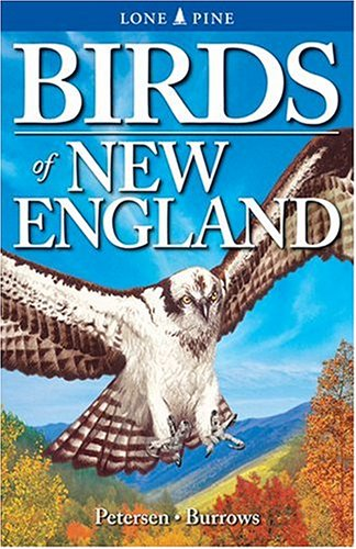 Birds of New England   2004 (Revised) edition cover