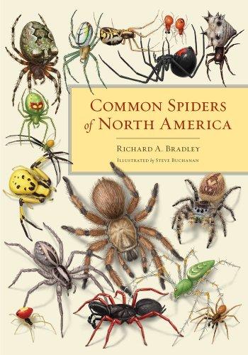 Common Spiders of North America   2013 edition cover
