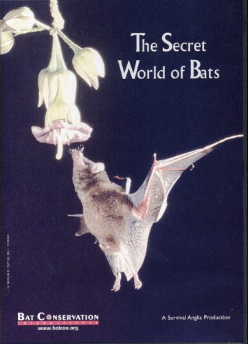 The Secret World of Bats:  2006 edition cover