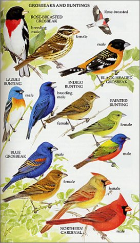 Eastern Birds A Guide to Field Identification  2001 (Revised) edition cover