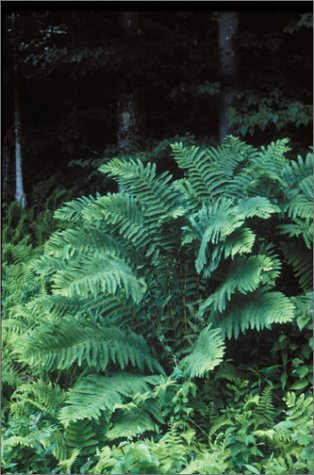 Fern Grower's Manual  2nd 2001 (Revised) 9780881924954 Front Cover