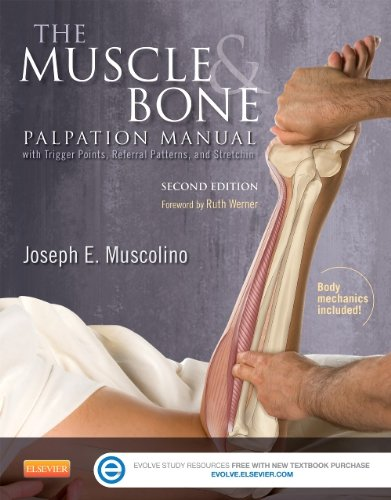 Muscle and Bone Palpation Manual with Trigger Points, Referral Patterns and Stretching  2nd 2015 edition cover