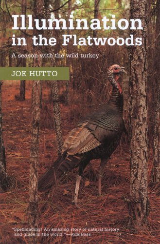 Illumination in the Flatwoods  N/A edition cover