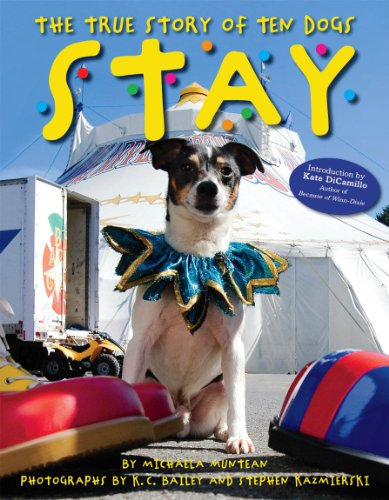 True Story of Ten Dogs - Stay   2012 9780545234979 Front Cover