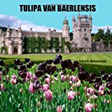 Tulipa Van Baerlensis 2013 9781482752069 Front Cover