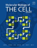 Molecular Biology of the Cell 6th 2014 Revised  9780815344322 Front Cover