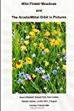 Wild Flower Meadows and the ArcelorMittal Orbit in Pictures 2013 9781493654598 Front Cover