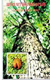 Little Nut to a Tree of Life Finding Your Place in Christ 2012 9781478318651 Front Cover